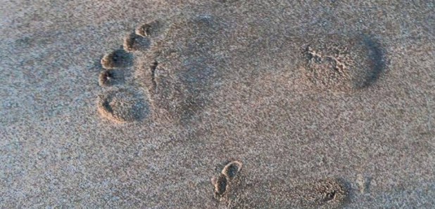 Michael Buble son footprint