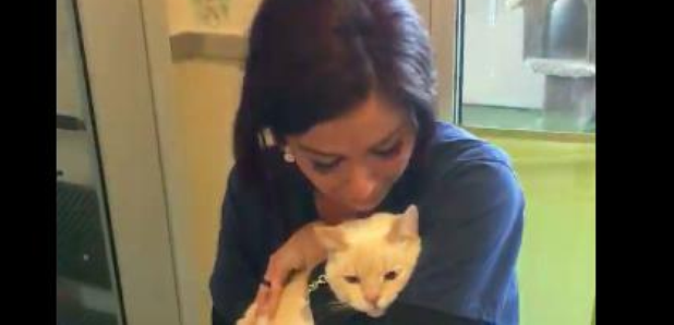 Cat owner reunited in animal shelter